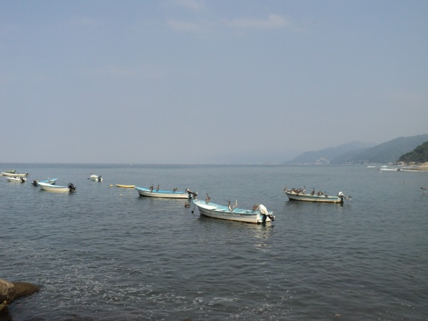 Fishing in Puerto Vallarta