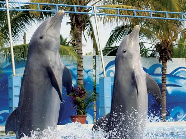 Puerto Vallarta dolphins