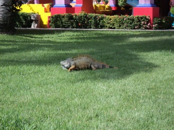 Royal Decameron Iguana