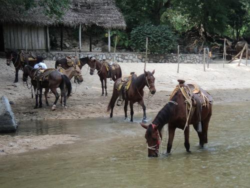 Puerto Vallarta Horseback Tour